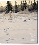 Footprints In Fresh Snow Canvas Print