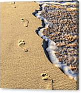 Footprints On Beach Canvas Print