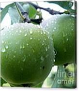 Forbidden Fruit Canvas Print