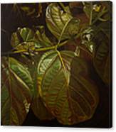 Forbidden Fruits Canvas Print