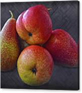 Forelle Pears Canvas Print