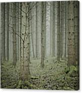 Forest #1 Canvas Print