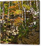 Forest Above The Cave Canvas Print