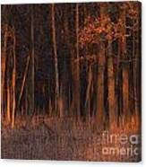 Forest At Sunset Canvas Print