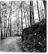 Forest Black And White 6 Canvas Print