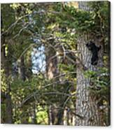 Forest Black Bear Cub Canvas Print