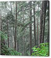 Forest Bluff Canvas Print