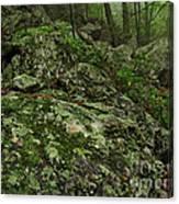 Forest Boulder Field Canvas Print