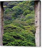 Forest Canopy Through The Window Of The Ruins Canvas Print