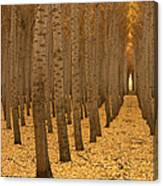 Forest Cathedral - One Canvas Print