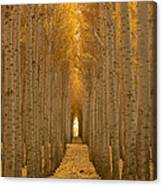 Forest Cathedral - Two Canvas Print