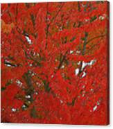 Forest Colors Of Fall Canvas Print