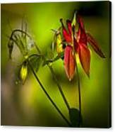 Forest Columbine  Canvas Print