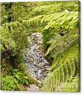 Forest Creek In Lush Rainforest Jungle Of Nz Canvas Print