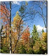 Forest Edge Autumn Pocono Mountains Pennsylvania Canvas Print