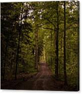 Forest Entry Canvas Print
