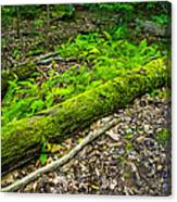 Forest Floor Gosnell Big Woods Canvas Print