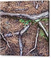 Forest Floor With Tree Roots Canvas Print