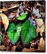 Forest Flora Canvas Print