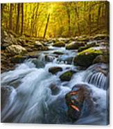 Forest Flow Canvas Print