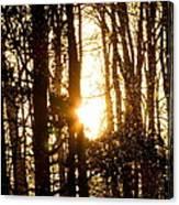Forest Flurry Lightscape  Canvas Print