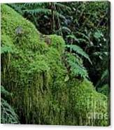 Forest Greenery Canvas Print