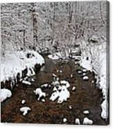 Forest Hill Creek Canvas Print