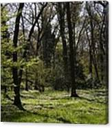 Forest In Spring Canvas Print