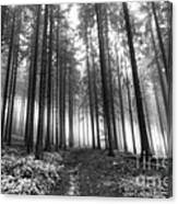 Forest In The Mist Canvas Print