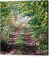 Forest Invitation Canvas Print