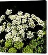 Forest Lace Canvas Print