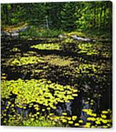 Forest Lake With Lily Pads Canvas Print