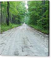 Forest Lane Canvas Print