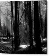 Forest Light In Black And White Canvas Print