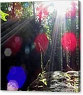 Forest Lightscape Canvas Print