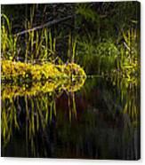 131005b-044 Forest Marsh 1 Canvas Print