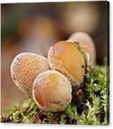 Forest Mushrooms Canvas Print