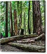 Forest Of Cathedral Grove Collection 2 Canvas Print