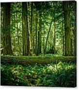 Forest Of Cathedral Grove Collection 7 Canvas Print