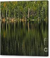 Forest Of Reflection Canvas Print