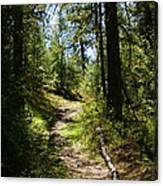 Forest Path In Spokane 2014 Canvas Print