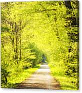 Forest Path In Spring With Bright Green Trees Canvas Print