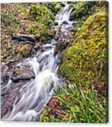 Forest Rapids Canvas Print