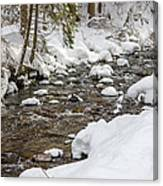 Winter Forest River Canvas Print