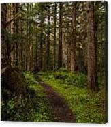 Forest Serenity Path Canvas Print