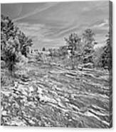 Forest Slope And Sky In Black And White Canvas Print