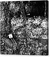 Forest Socket Canvas Print
