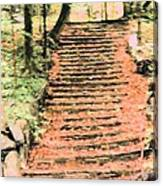 Forest Steps Canvas Print