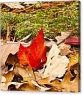 Forest Still Life 5 Canvas Print
