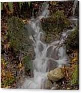 Forest Stream Cascade Canvas Print